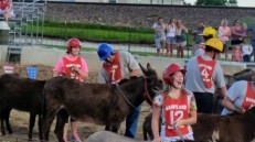 aaa-donkey